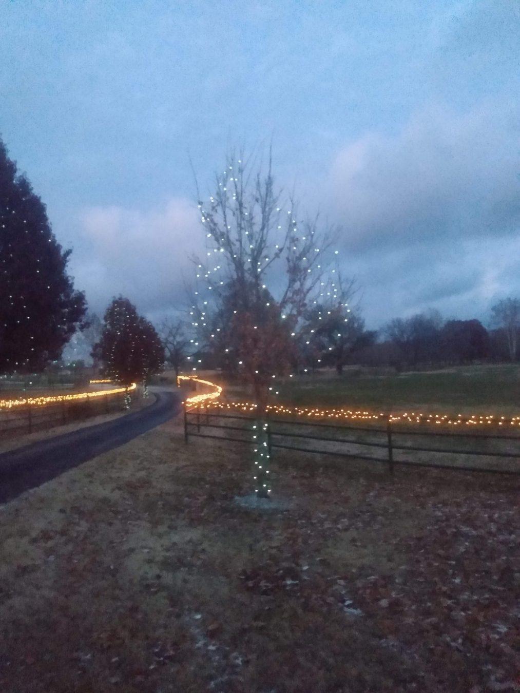 Christmas Light Installation driveway