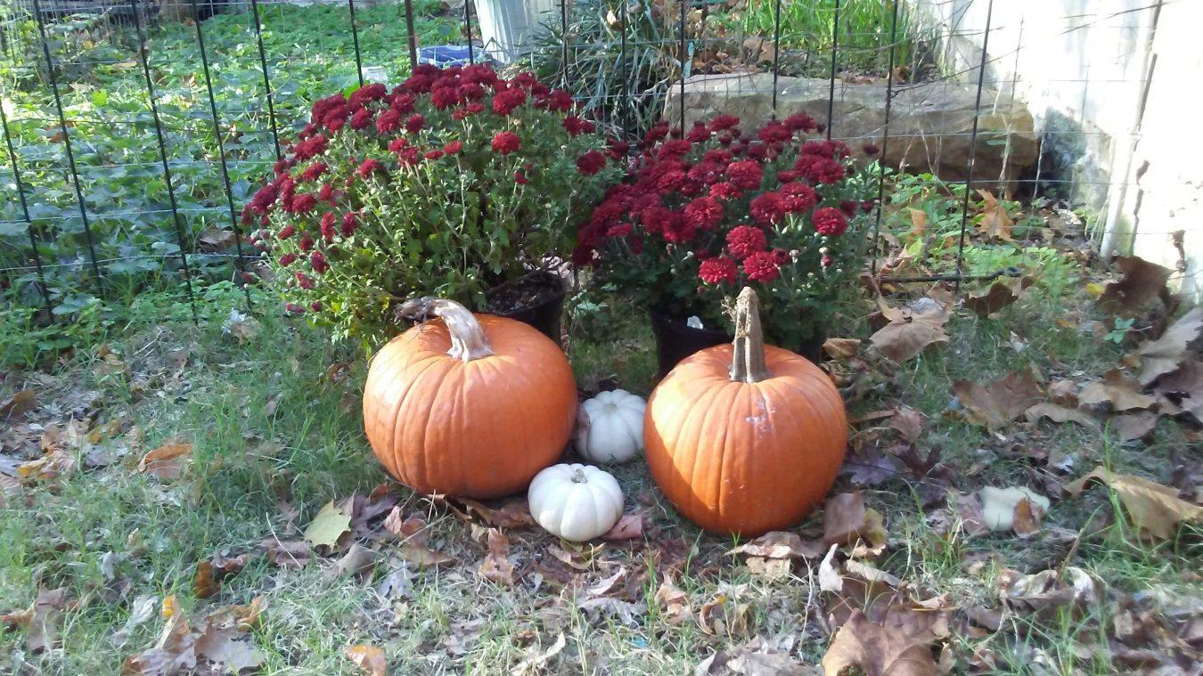 pumpkins-and-mums